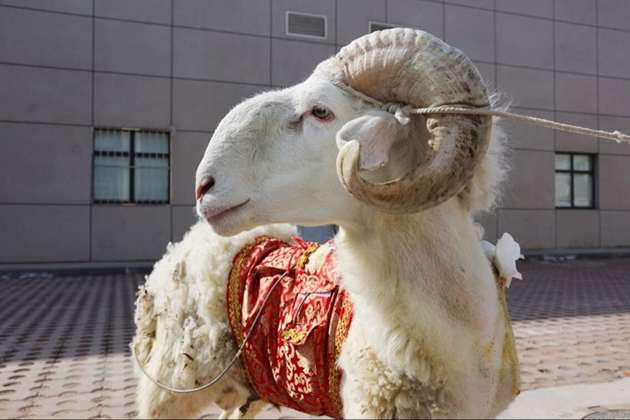 泰达国际心血管病医院动物实验中心呈现